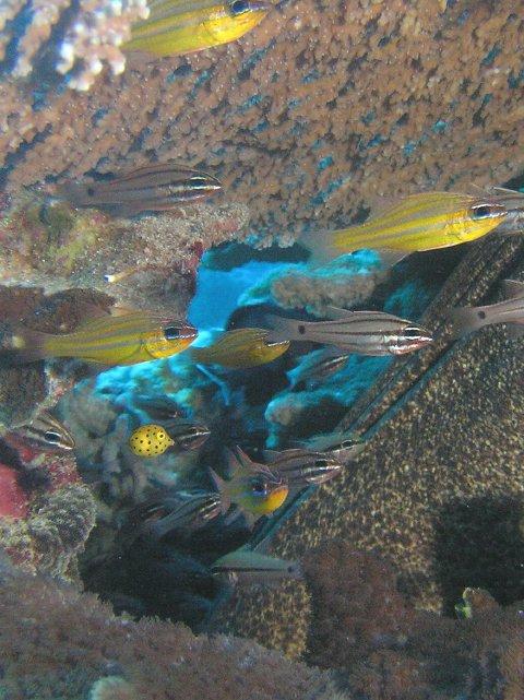 Coral Sea, Coral Sea,Australien