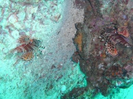 Moskito Diving,Koh Phi Phi,Andamanensee,Thailand