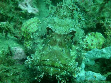 Sea Spirit Diving Resort (Giardini Naxos,Sizilien),Italien