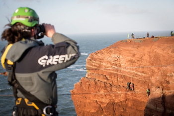In the high cliffs of Helgoland plastic trash from the nests of birds is collected © Greenpeace