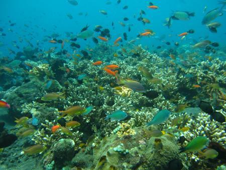 Amed Scuba Tauchzentrum im Nordosten Balis (Amed,Tulamben),Bali,Indonesien