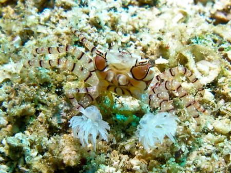 Kungkungan Dive Center,Lembeh,North Sulawesi,Sulawesi,Indonesien