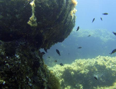 Aegeanscuba,Charavgi,Samos,Griechenland