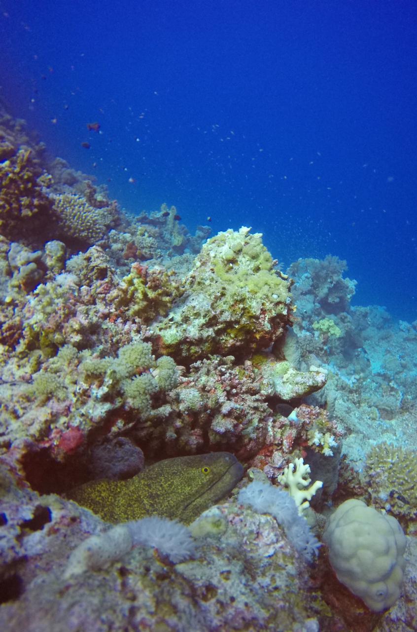 Scuba World Divers SuneoClub Reef Marsa?Hausriff_7, Tauchen Ägypten Marsa Alam Port Ghalib, Scuba World Divers, SuneoClub Reef Marsa, Port Ghalib, Ägypten, El Quseir bis Port Ghalib