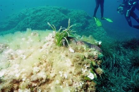 Mallorca Grosses Riff,Spanien