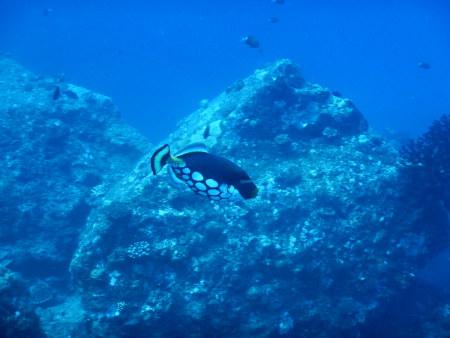 Dive Tribe Mauritius,Mauritius