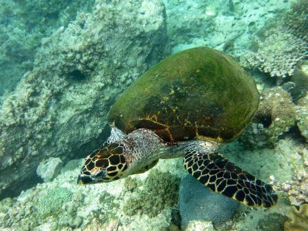Extra Divers Qantab,Oman