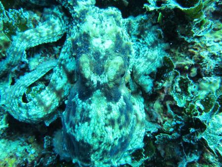 Styria-Guenis-Diving-Group,Insel Krk,Kroatien