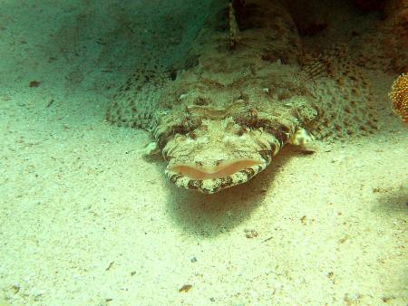 ADROUB diving,Marsa Alam und südlich,Ägypten