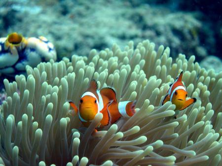 Sea Breeze Resort,Bunaken,Indonesien