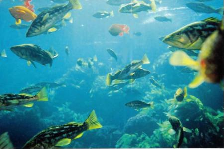 Horizon Charter,San Diego,Kalifornien,USA