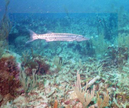 Bahia Principe Dive Center,Mexiko