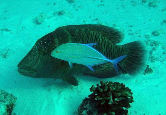 Royal Island (Baa Atoll), Royal Island,Malediven