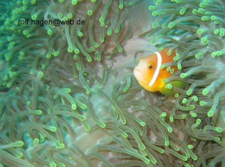 Fihalhohi (auch Fiha Llhoh) - Süd Male Atoll,Malediven