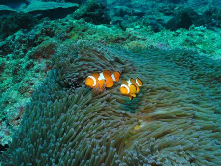 Lombok-Dive,Senggigi,Allgemein,Indonesien