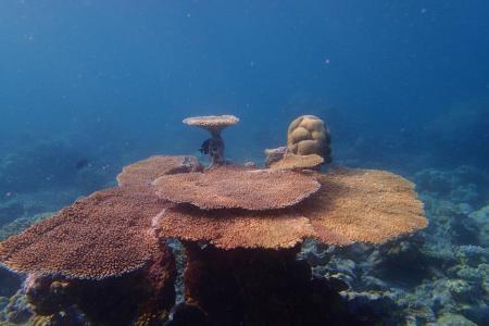 Casa Mia Dive Center,Mathiveri,Nord Ari Atoll,Malediven