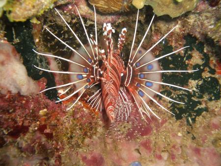Immanuel Dive Center - Daniels Homestay - Bunaken,Sulawesi,Indonesien