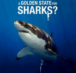 Film: A Golden State for Sharks - Shark Savers Germany