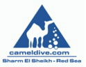 Logo Camel Dive Club