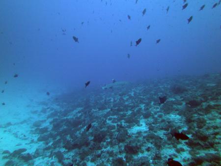 MV Leo,Malediven