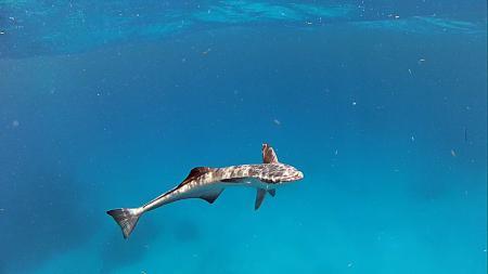 Grand Bahama Scuba,Bahamas