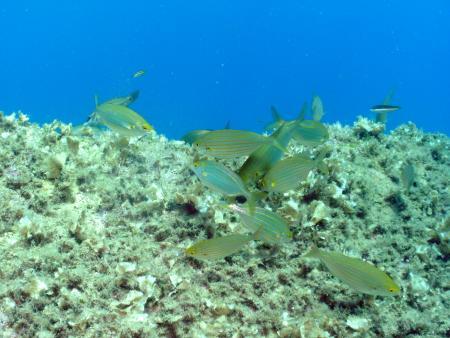Pianeta Diving,Arbatax Park Resort,Sardinien,Italien