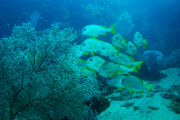 Lissenung Island Resort / Kavieng (New Ireland), Lissenung Island Resort / Kavieng (New Ireland),Papua-Neuguinea