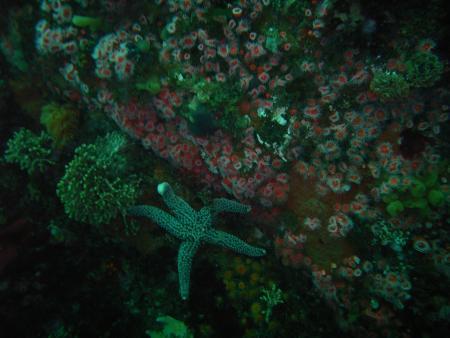 Monterey, USA, Kalifornien