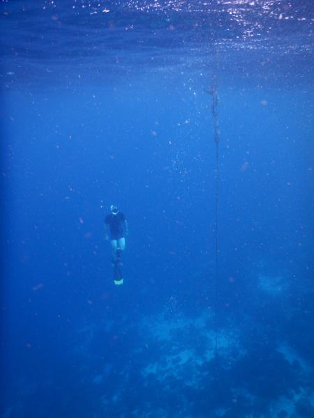 Curacao Divers (Sun Reef Village),Sint Michiel,Curaçao,Niederländische Antillen