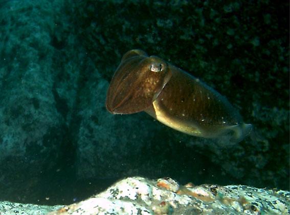 Madeira - Atalaia Diving Center, Madeira allgemein,Portugal