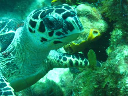 Eco Divers,West End,Roatan,Honduras