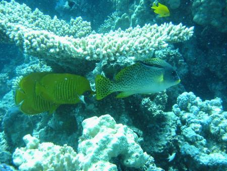 Divers Lodge Hurghada,Hurghada,Ägypten