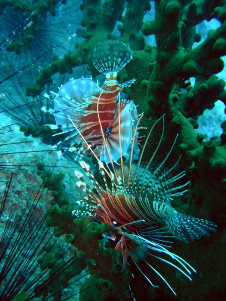 Angel Dive,Nha Trang,Vietnam