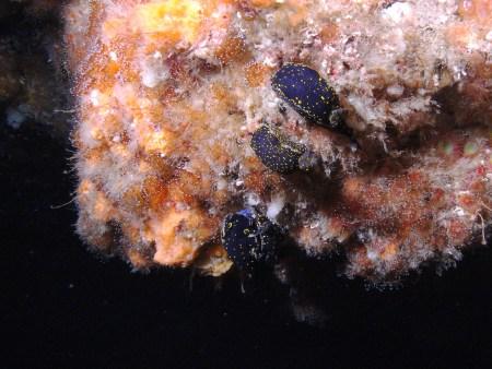 Cowfish Dive Center,Santo Amaro,Pico,Azoren,Portugal
