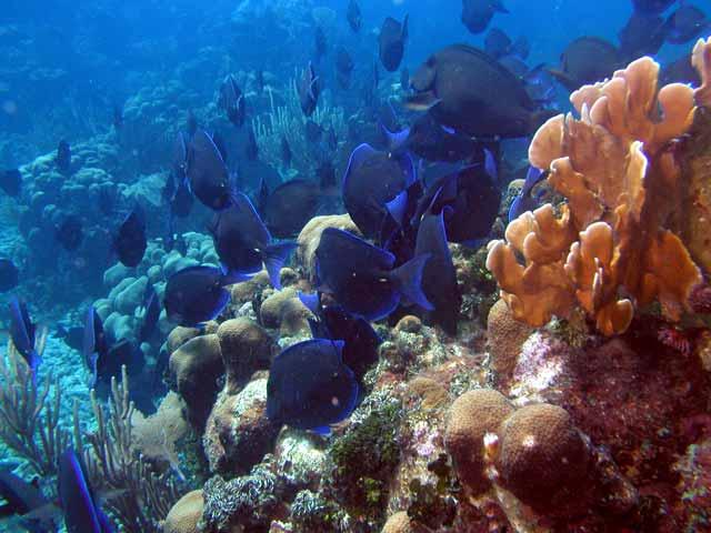 Catalina, Catalina Island,Punta Cana,Dominikanische Republik