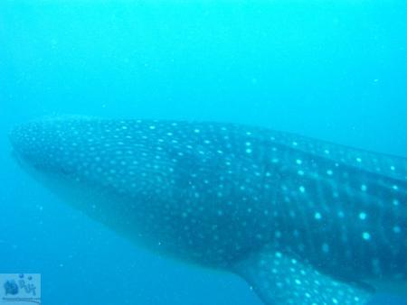 Baani Adventurer,Malediven