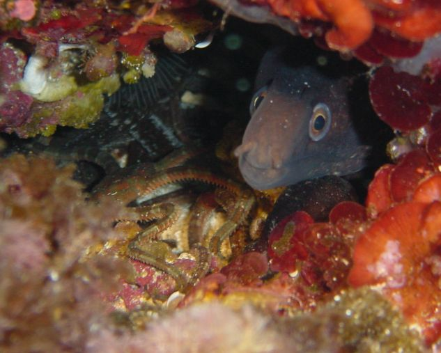 Formentera - La Mola Diving Center, Formentera,Spanien