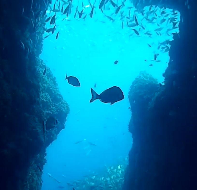 Starfish Diving Cala Millor, Mallorca, Spanien, Balearen