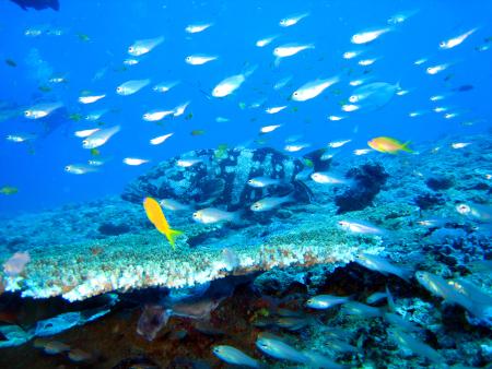 Atimoo plongée Madagascar,Madagaskar