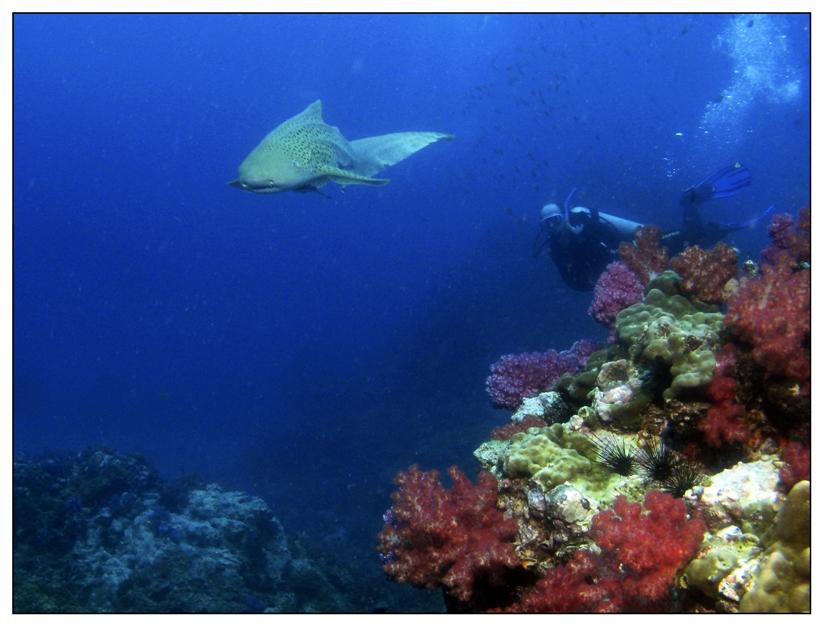 Rund um Koh Doc Mai und Shark Point, Shark Point / Anemon Reef,Thailand