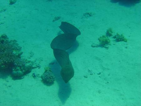 Seawolf - Divers,Hurghada,Ägypten