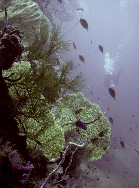 Atlantis Diving,Koh Lanta,Andamanensee,Thailand