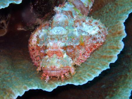 Dive Point Alcoy,Philippinen