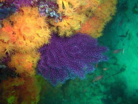 Bee Divers Gibraltar,Aldiana Alcaidesa,Festland,Spanien