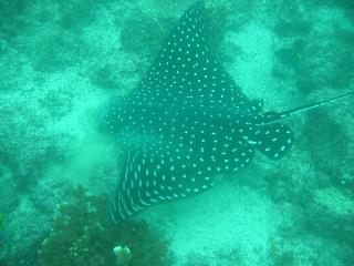Resort Divers Costa Rica,Golfo de Papagayo,Costa Rica