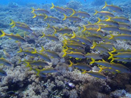 Bajo Dive Club,Labuanbajo,Allgemein,Indonesien