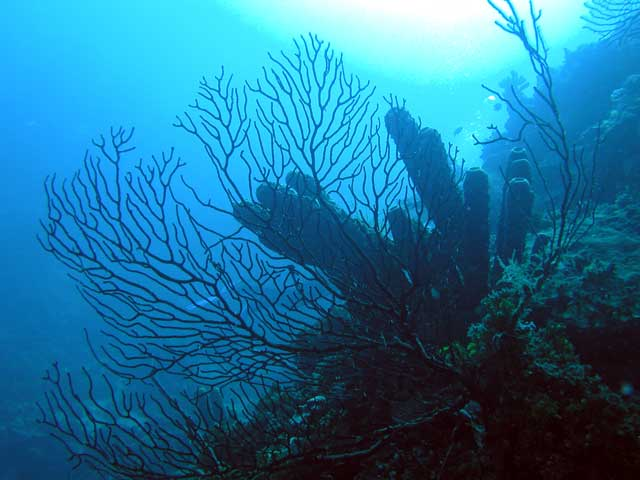 Catalina, Catalina Island,Dominikanische Republik