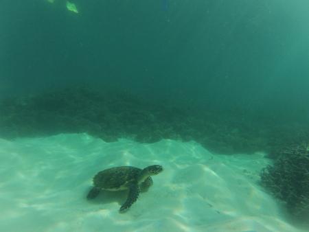 Coral Diving,Hotel Le Preskil,Pointe D´Esny,Mauritius