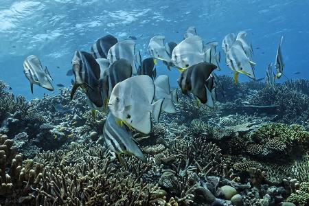 Aquaventure,Addu-Atoll,Malediven