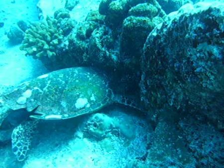 Silhouette Cruises,Seychellen